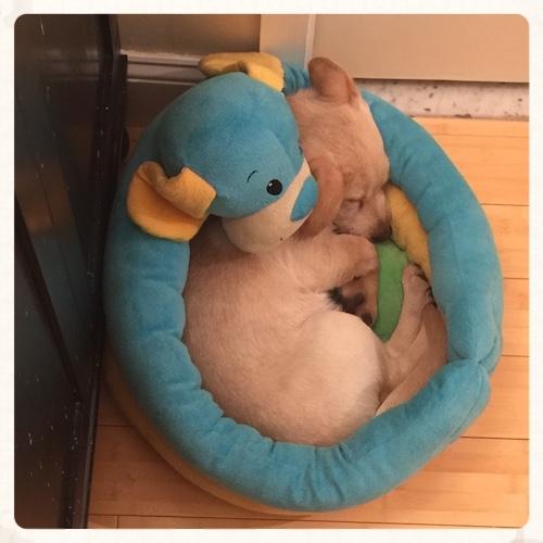 Otto-Sleeping-500px